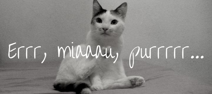 Pisica de apartament
